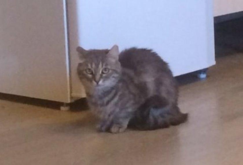 Кошка в реабилитации